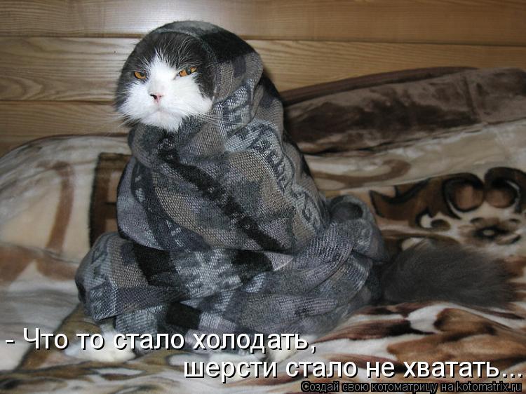Котоматрица: - Что то стало холодать,  шерсти стало не хватать...