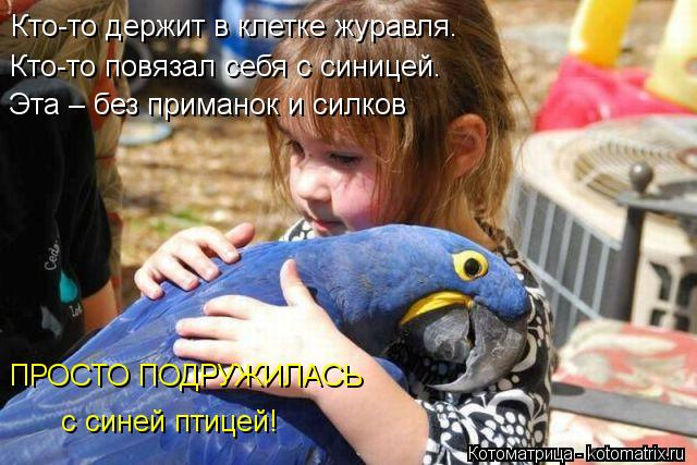 Котоматрица: Кто-то держит в клетке журавля. Кто-то повязал себя с синицей. Эта – без приманок и силков ПРОСТО ПОДРУЖИЛАСЬ с синей птицей!