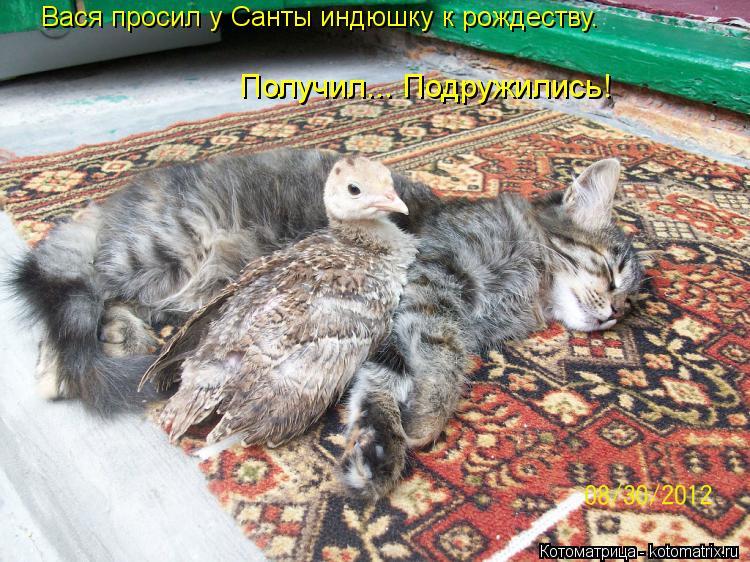 Котоматрица: Вася просил у Санты индюшку к рождеству. Получил... Подружились!