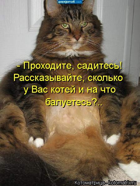 Котоматрица: - Проходите, садитесь! Рассказывайте, сколько  у Вас котей и на что балуетесь?..