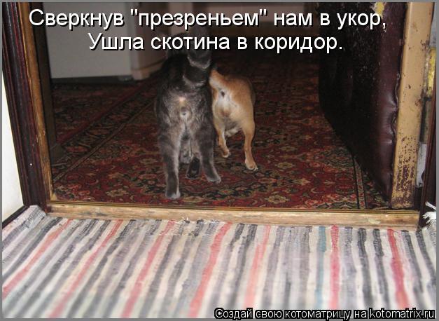 "Котоматрица: Сверкнув ""презреньем"" нам в укор, Ушла скотина в коридор."