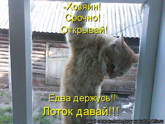 Котоматрица: -Хозяин! Срочно! Открывай! Едва держусь!! Лоток давай!!!