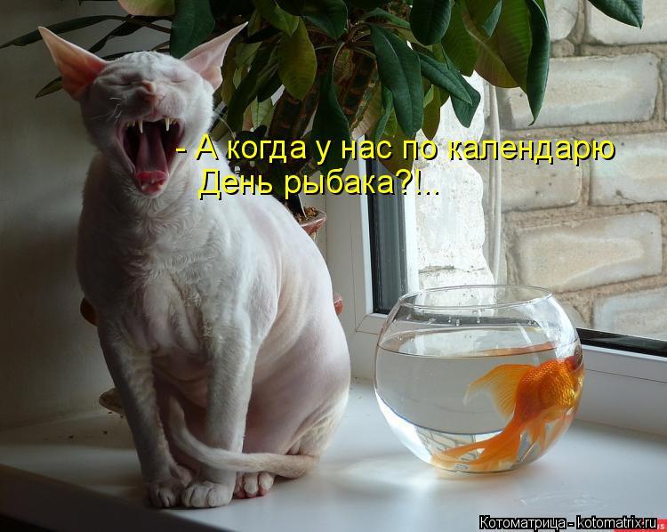 Котоматрица: - А когда у нас по календарю День рыбака?!..