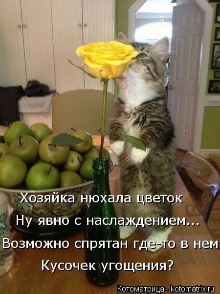 Котоматрица: Возможно спрятан где-то в нем Ну явно с наслаждением... Хозяйка нюхала цветок Кусочек угощения?