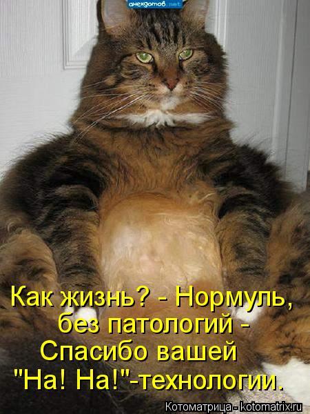 """Котоматрица: Как жизнь? - Нормуль, без патологий -  Спасибо вашей """"На! На!""""-технологии."""