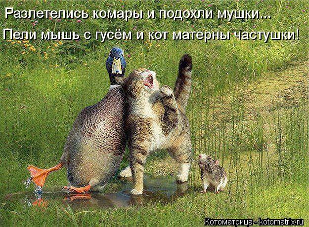 Котоматрица: Разлетелись комары и подохли мушки...  Пели мышь с гусём и кот матерны частушки!