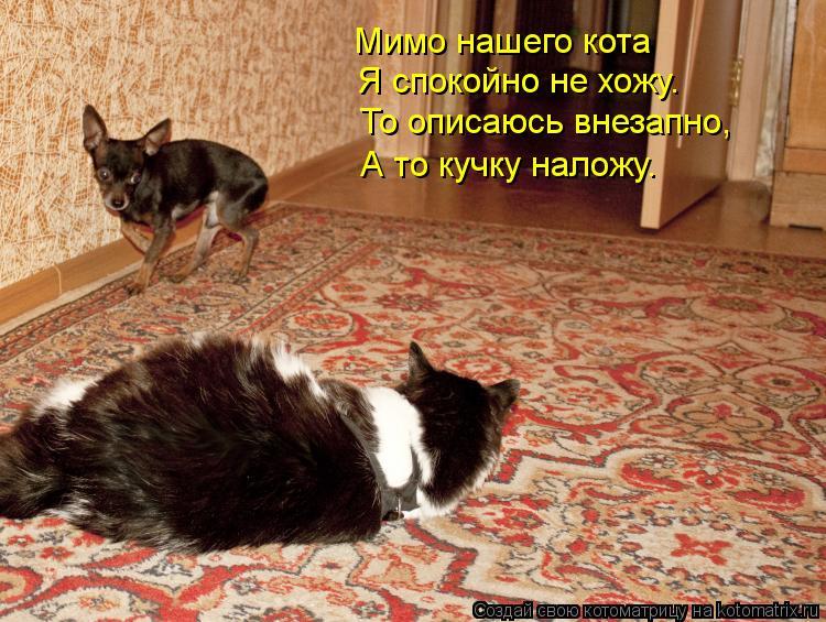 Котоматрица: Мимо нашего кота  Я спокойно не хожу. То описаюсь внезапно, А то кучку наложу.