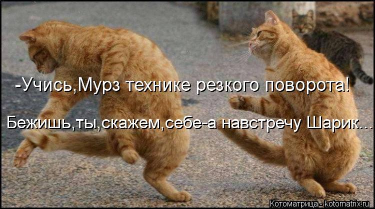 Котоматрица: -Учись,Мурз технике резкого поворота! Бежишь,ты,скажем,себе-а навстречу Шарик...