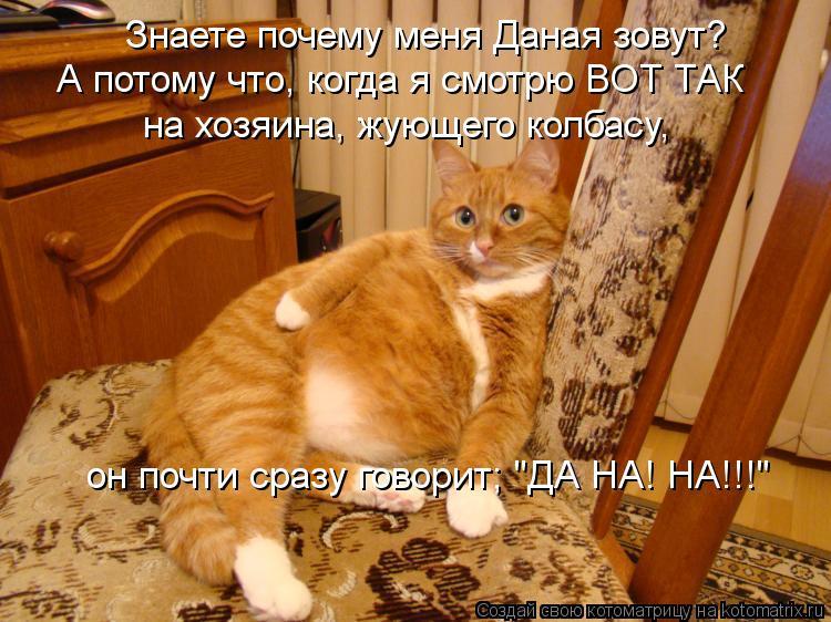 """Котоматрица: Знаете почему меня Даная зовут? А потому что, когда я смотрю ВОТ ТАК на хозяина, жующего колбасу,  он почти сразу говорит; """"ДА НА! НА!!!"""""""