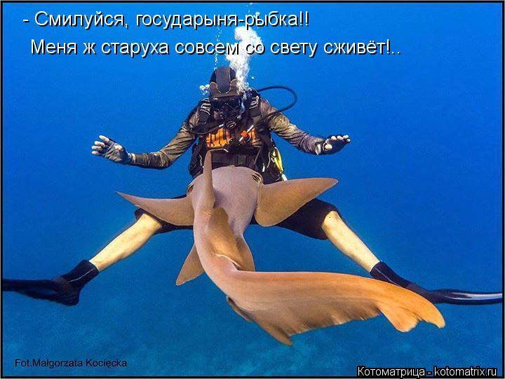 Котоматрица: - Смилуйся, государыня-рыбка!! Меня ж старуха совсем со свету сживёт!..
