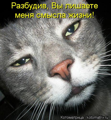 Котоматрица: Разбудив, Вы лишаете меня смысла жизни!