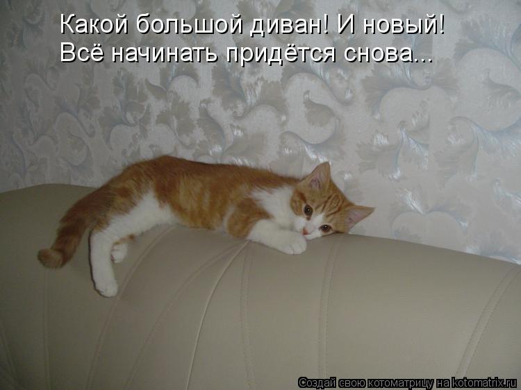 Котоматрица: Какой большой диван! И новый! Всё начинать придётся снова...