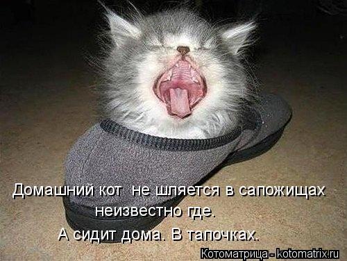 Котоматрица: Домашний кот  не шляется в сапожищах неизвестно где. А сидит дома. В тапочках.