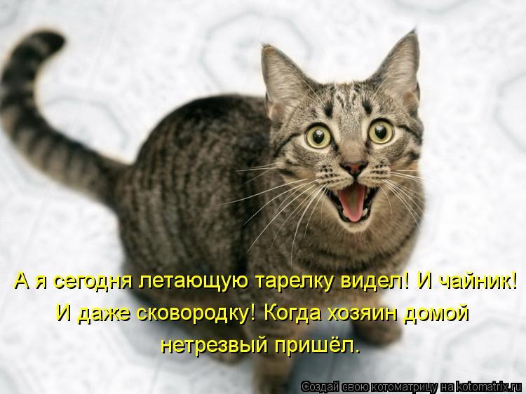 Котоматрица: А я сегодня летающую тарелку видел! И чайник!  И даже сковородку! Когда хозяин домой  нетрезвый пришёл.
