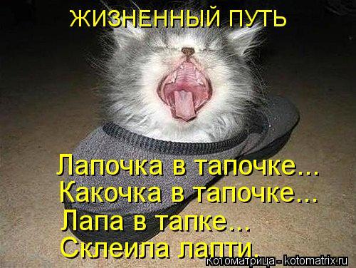 Котоматрица: ЖИЗНЕННЫЙ ПУТЬ Лапочка в тапочке... Какочка в тапочке... Лапа в тапке... Склеила лапти.