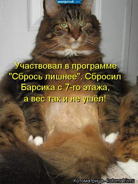 """Котоматрица: Участвовал в программе """"Сбрось лишнее"""". Сбросил Барсика с 7-го этажа, а вес так и не ушёл!"""