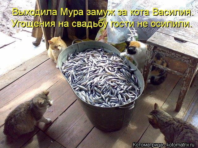 Котоматрица: Угощения на свадьбу гости не осилили. Выходила Мура замуж за кота Василия.