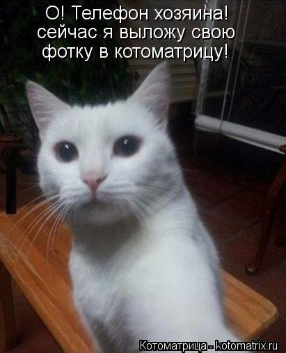 Котоматрица: О! Телефон хозяина! сейчас я выложу свою фотку в котоматрицу!