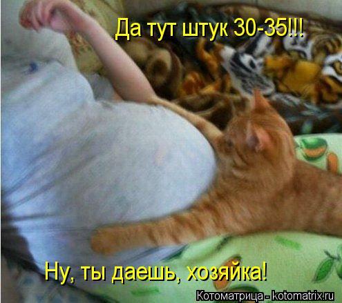 Котоматрица: Да тут штук 30-35!!! Ну, ты даешь, хозяйка!
