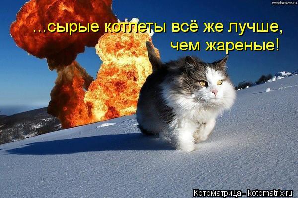 Котоматрица: ...сырые котлеты всё же лучше, чем жареные!