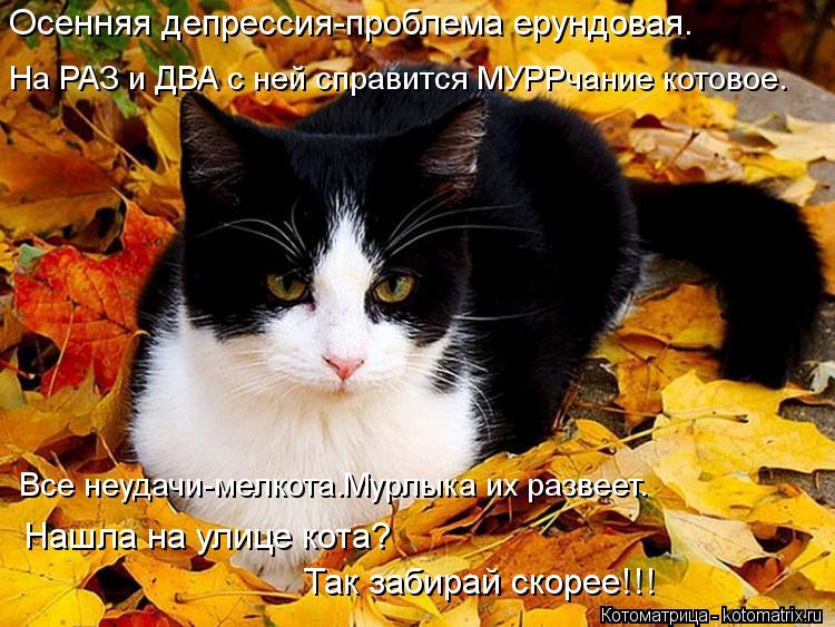 Котоматрица: Осенняя депрессия-проблема ерундовая. На РАЗ и ДВА с ней справится МУРРчание котовое. Все неудачи-мелкота.Мурлыка их развеет. Нашла на улиц