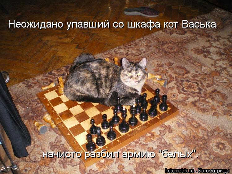 "Котоматрица: Неожидано упавший со шкафа кот Васька начисто разбил армию ""белых""."
