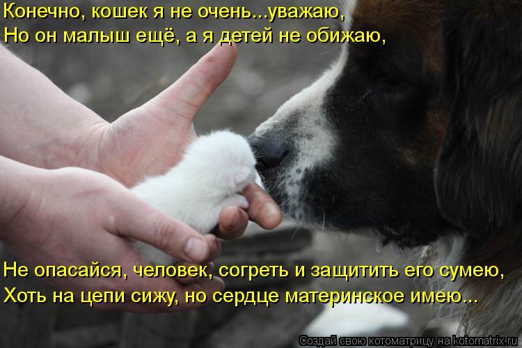 Котоматрица: Но он малыш ещё, а я детей не обижаю, Конечно, кошек я не очень...уважаю, Не опасайся, человек, согреть и защитить его сумею, Хоть на цепи сижу, н