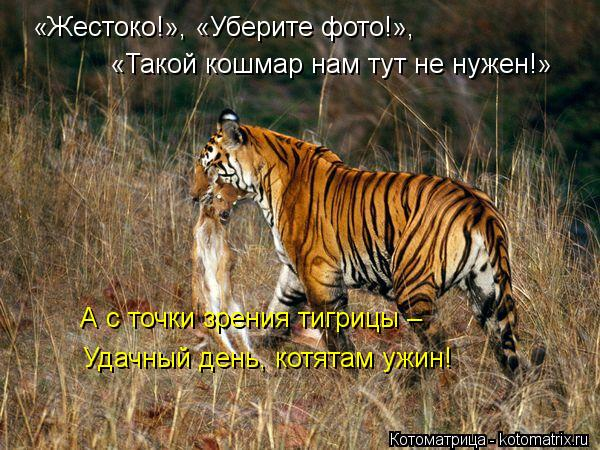 Котоматрица: «Жестоко!», «Уберите фото!», «Такой кошмар нам тут не нужен!» А с точки зрения тигрицы –  Удачный день, котятам ужин!