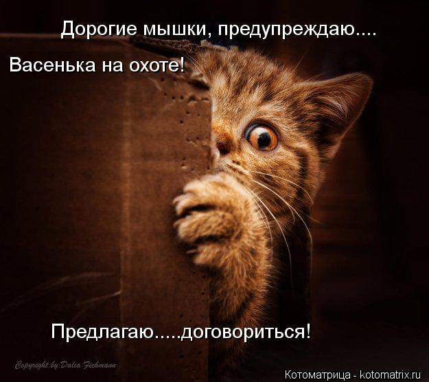 Котоматрица: Дорогие мышки, предупреждаю.... Васенька на охоте!  Предлагаю.....договориться!
