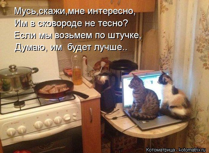 Котоматрица: Мусь,скажи,мне интересно, Им в сковороде не тесно? Если мы возьмем по штучке, Думаю, им  будет лучше..
