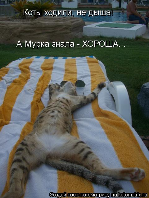 Котоматрица: А Мурка знала - ХОРОША... Коты ходили, не дыша!