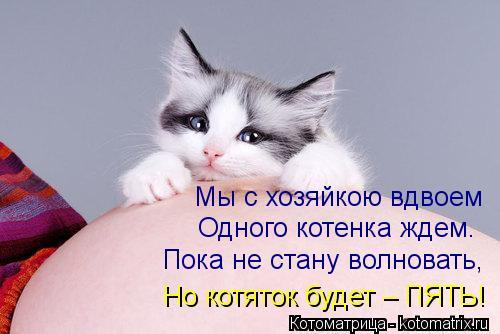 Котоматрица: Мы с хозяйкою вдвоем  Одного котенка ждем. Пока не стану волновать,  Но котяток будет – ПЯТЬ!