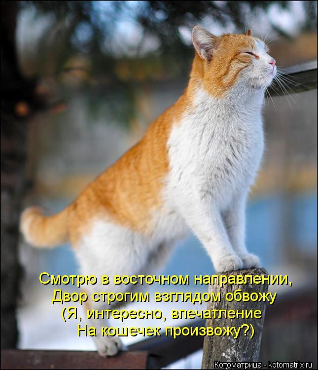 Котоматрица: Смотрю в восточном направлении, Двор строгим взглядом обвожу (Я, интересно, впечатление На кошечек произвожу?)