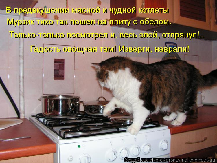 Котоматрица: В предвкушении мясной и чудной котлеты Мурзик тихо так пошел на плиту с обедом. Только-только посмотрел и, весь злой, отпрянул!.. Гадость ово