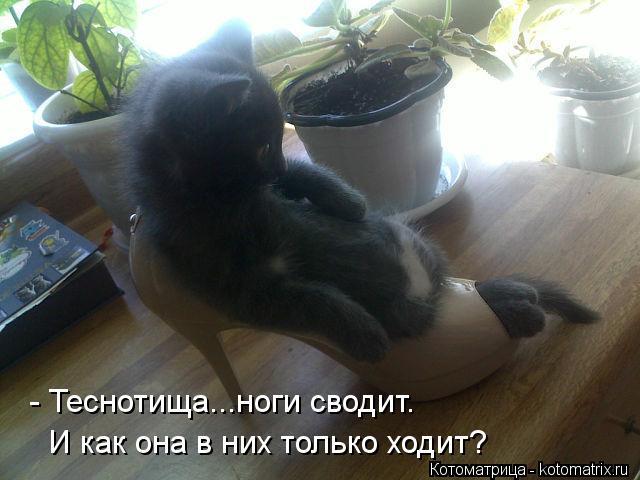 Котоматрица: - Теснотища...ноги сводит. И как она в них только ходит?