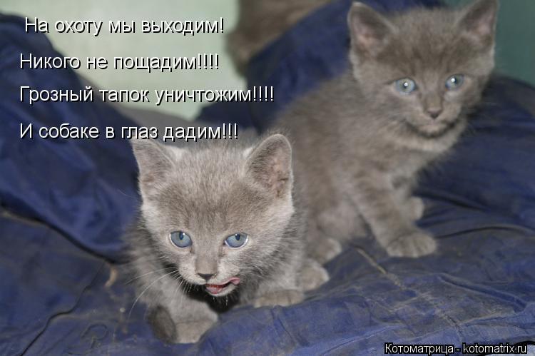 Котоматрица: На охоту мы выходим! Грозный тапок уничтожим!!!! И собаке в глаз дадим!!! Никого не пощадим!!!!