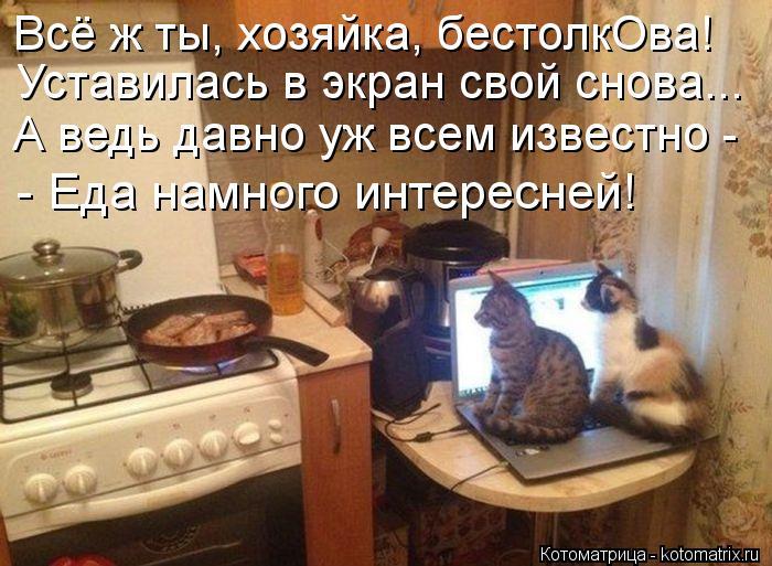 Котоматрица: Всё ж ты, хозяйка, бестолкОва!  Уставилась в экран свой снова...  А ведь давно уж всем известно - - Еда намного интересней!