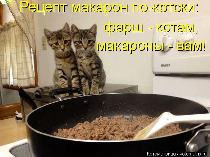 Котоматрица: Рецепт макарон по-котски: фарш - котам, макароны - вам!