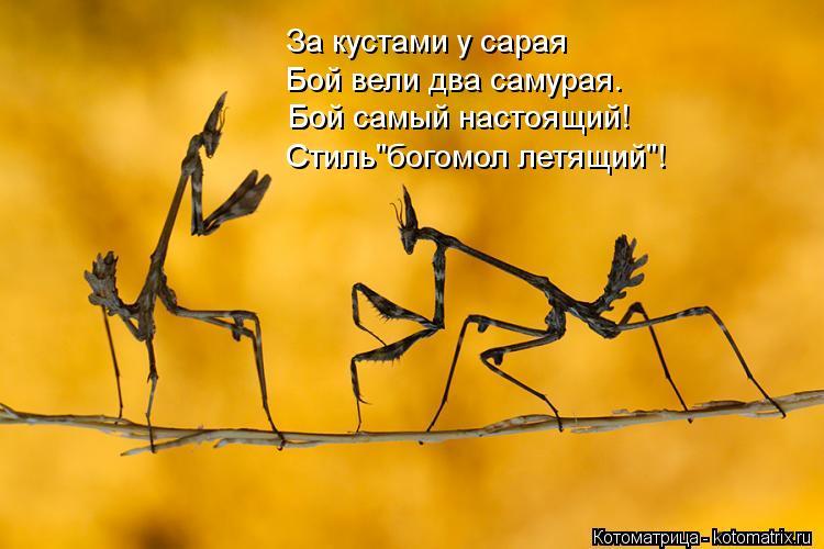 """Котоматрица: За кустами у сарая Бой вели два самурая.  Бой самый настоящий!  Стиль""""богомол летящий""""!"""