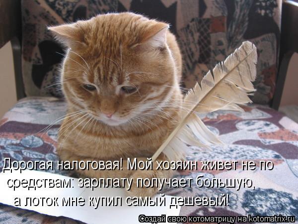 Котоматрица: Дорогая налоговая! Мой хозяин живет не по средствам: зарплату получает большую, а лоток мне купил самый дешевый!