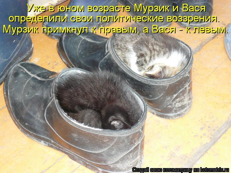 Котоматрица: Уже в юном возрасте Мурзик и Вася  определили свои политические воззрения. Мурзик примкнул к правым, а Вася - к левым.