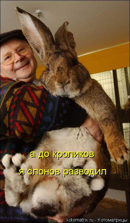 Котоматрица: а до кроликов  я слонов разводил