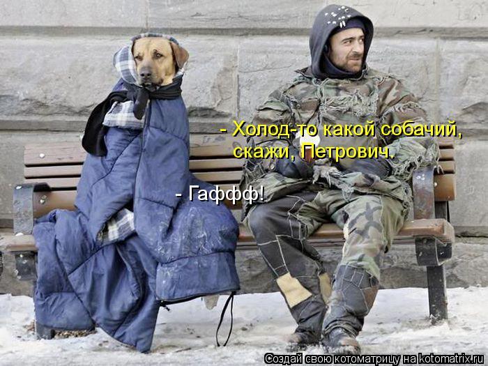 Котоматрица: - Холод-то какой собачий, скажи, Петрович. - Гаффф!