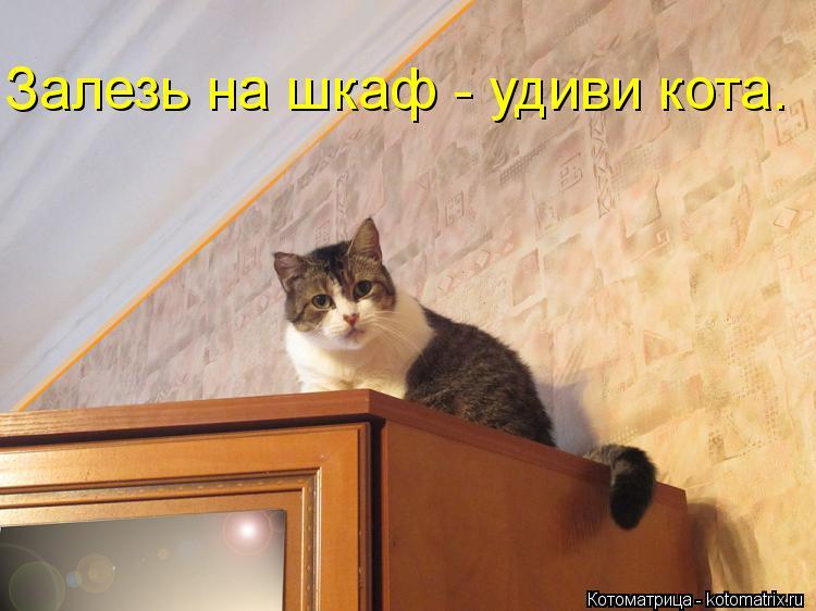 Котоматрица: Залезь на шкаф - удиви кота.
