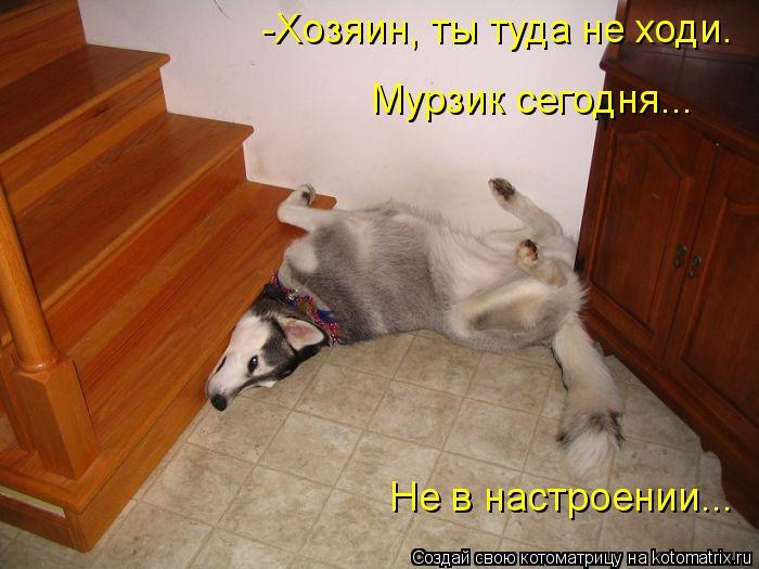 Котоматрица: -Хозяин, ты туда не ходи. Мурзик сегодня...  Не в настроении...