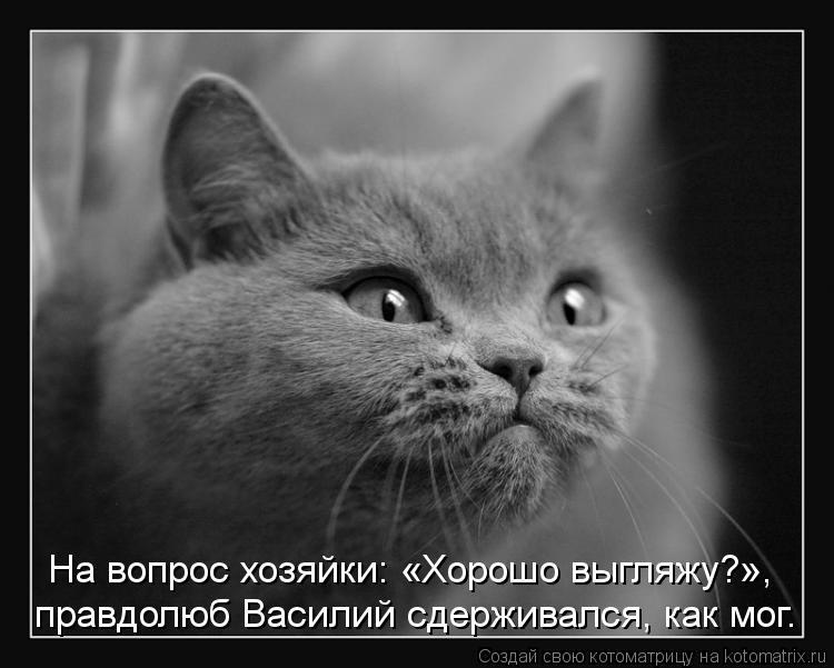 Котоматрица: правдолюб Василий сдерживался, как мог. На вопрос хозяйки: «Хорошо выгляжу?»,