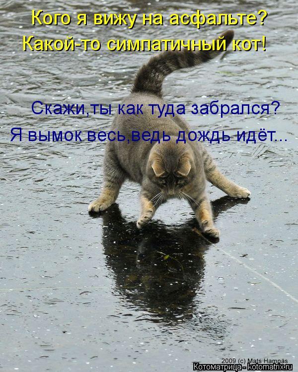 Котоматрица: Скажи,ты как туда забрался? Кого я вижу на асфальте? Какой-то симпатичный кот! Я вымок весь,ведь дождь идёт...