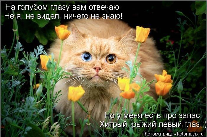 Котоматрица: На голубом глазу вам отвечаю Не я, не видел, ничего не знаю! Но у меня есть про запас Хитрый, рыжий левый глаз ;)