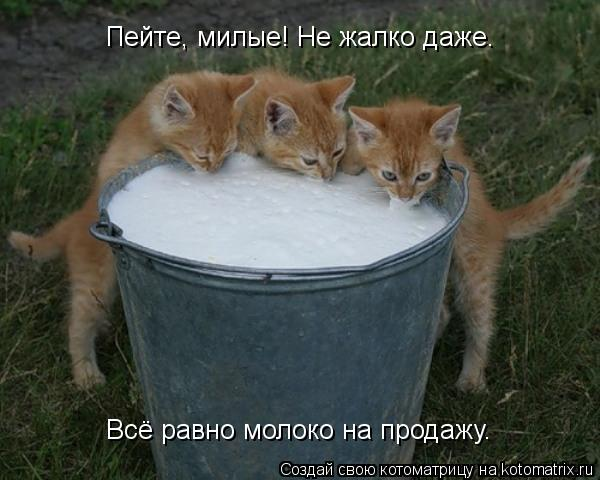 Котоматрица: Пейте, милые! Не жалко даже. Всё равно молоко на продажу.