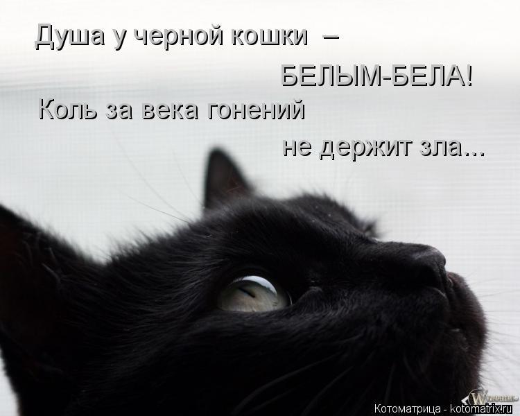 Котоматрица: Душа у черной кошки  –  БЕЛЫМ-БЕЛА! Коль за века гонений не держит зла...